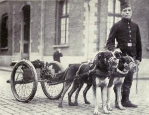Belgian_dogs_trained_to_draw_quick-firing_guns