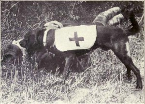 Ambulance_Dog